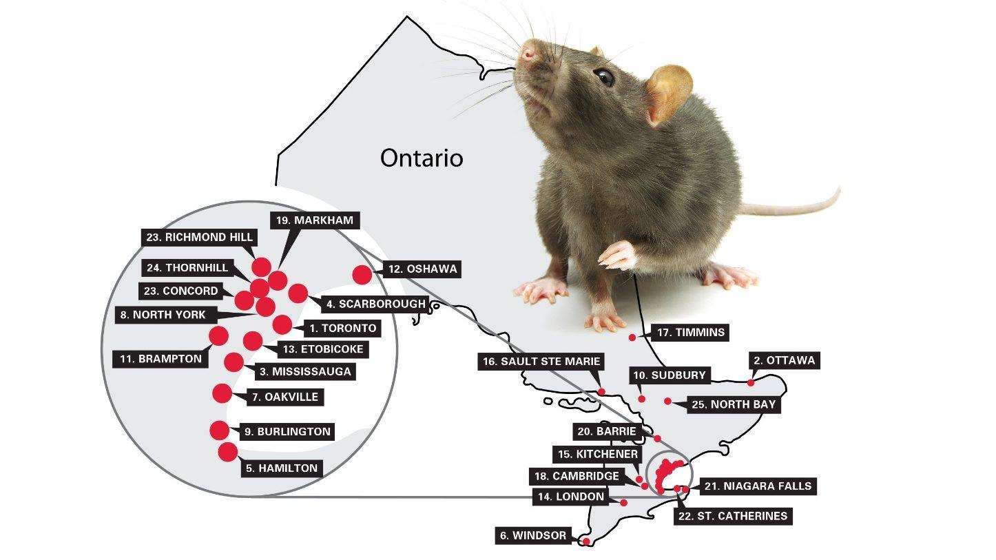 7种绿色无毒的生物驱鼠法