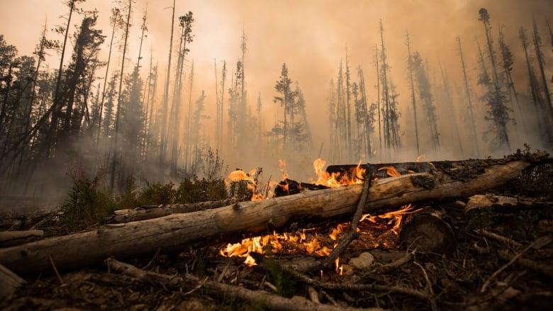 bc-wildfires-british-columbia-state-of-emergency