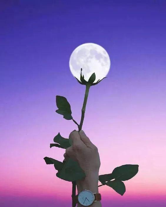 是你撑起了月亮