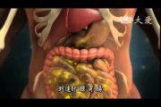 视频:人體奧秘系列
