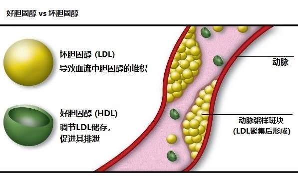 降胆固醇的食物