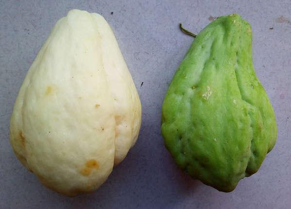 多伦多种植佛手瓜