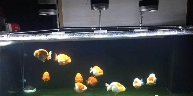 金鱼缸的摆放