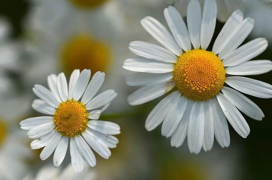 室内养花禁忌 1 - 容易致过敏的植物