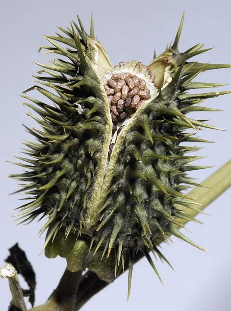 室内养花禁忌 2 – 有毒性的植物