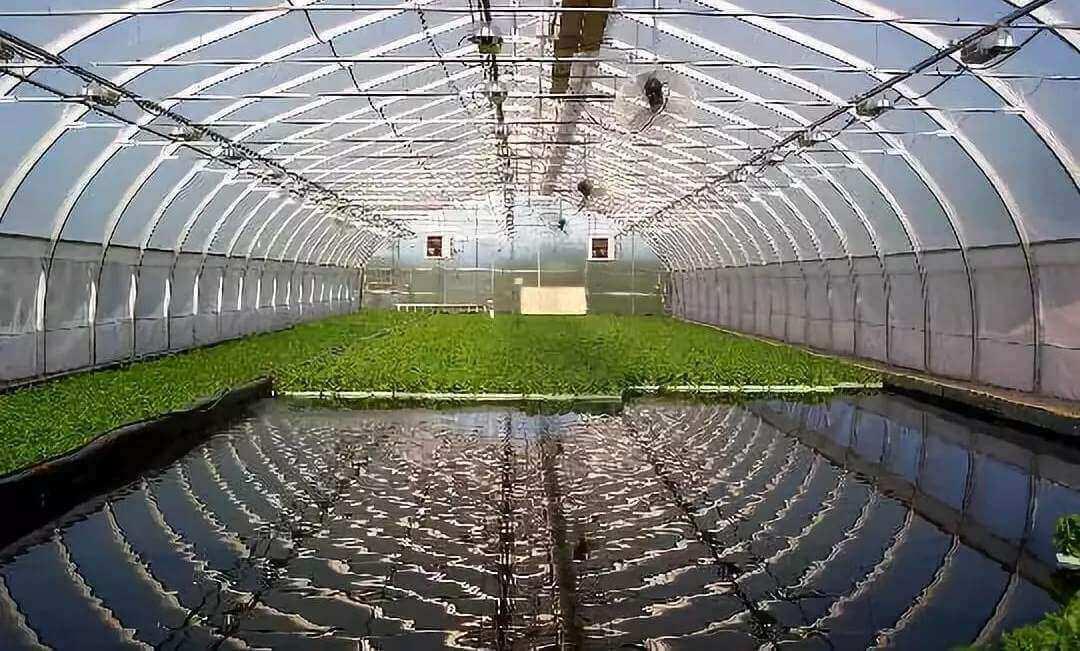 水生蔬菜系统