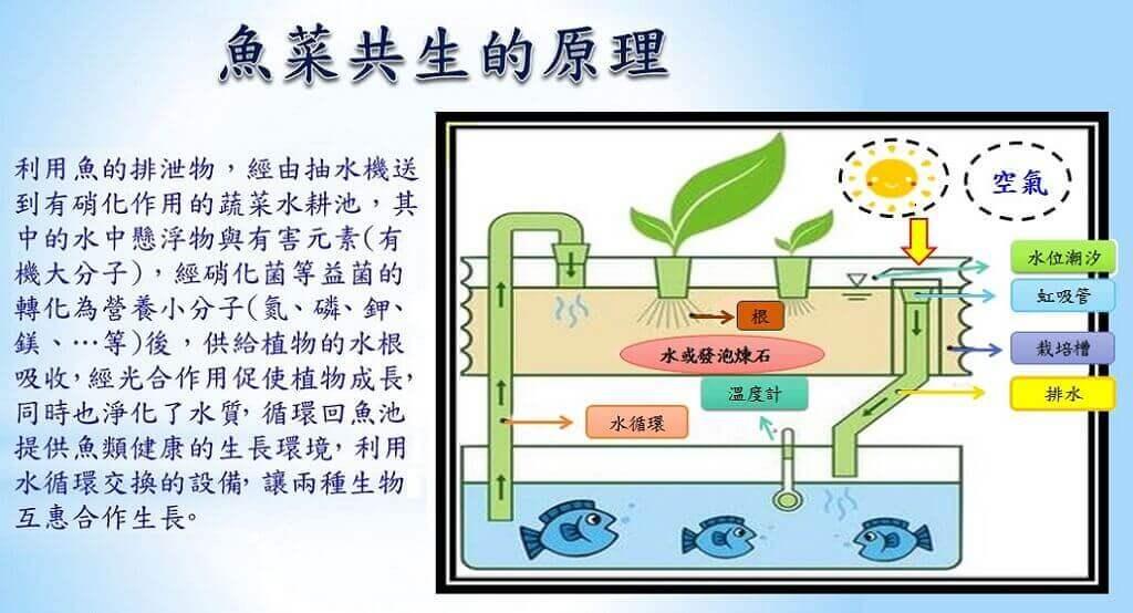鱼菜共生系统