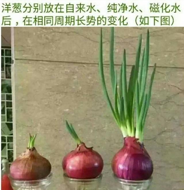 养花用这种水,干净卫生,促进植物生长,比淘米水养分